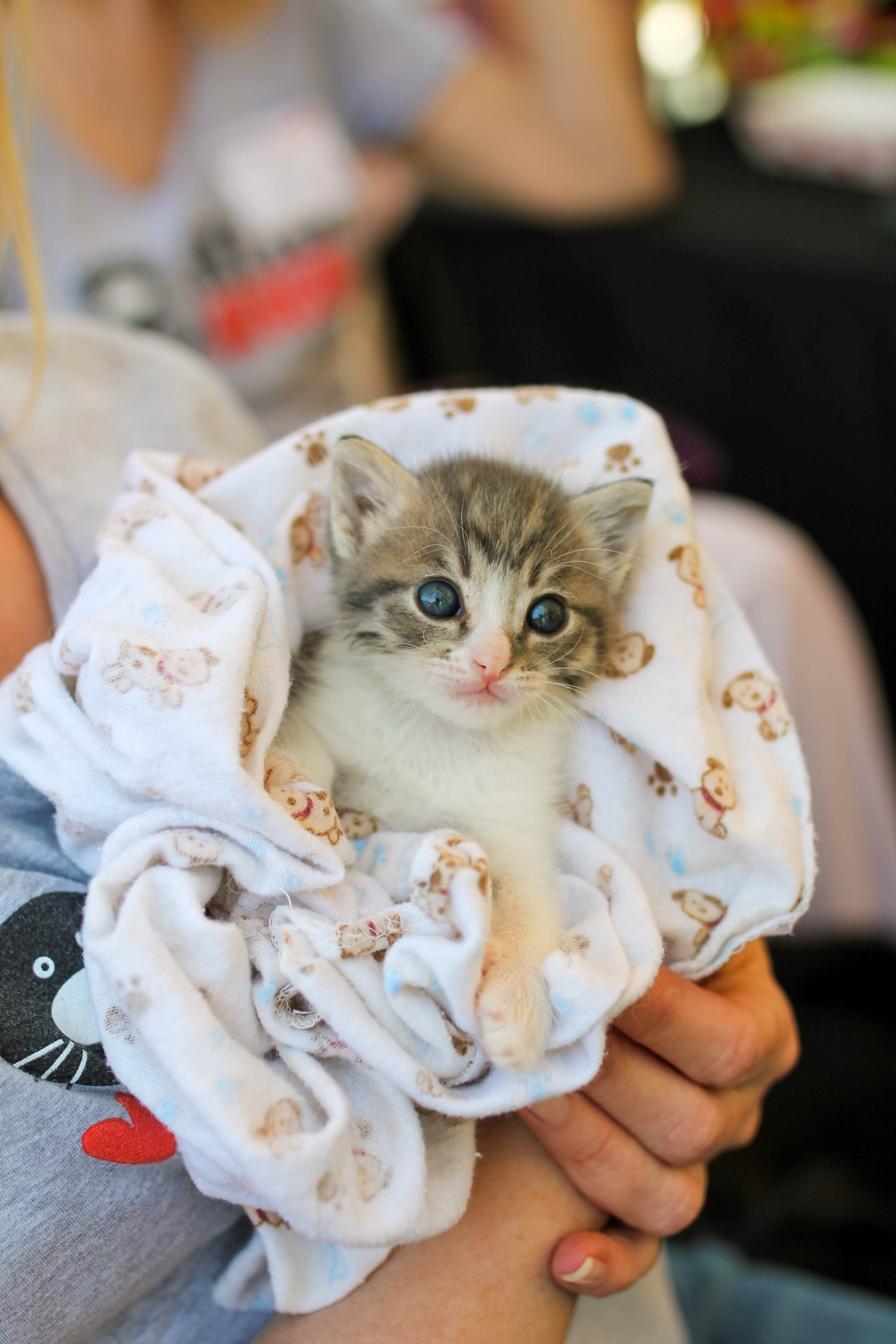 Feral Cat Care